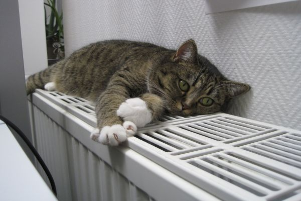 Eine Katze liegt auf einem Heizkörper.