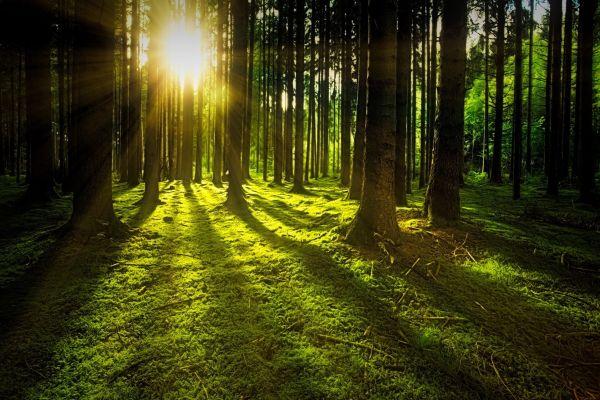 Holzenergie-Fachverband antwortet auf Kritik