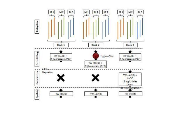 Schematische Darstellung zum Aufbau der Testsysteme sowie dem Vorgehen bei deren Erstbefüllung (M = Material, TW = Trinkwasser).