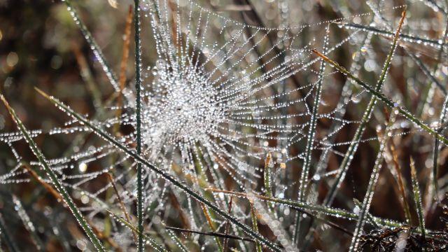 Spinnennetz mit Tautropfen in Nahaufnahme