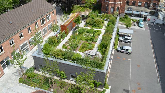 """Foto: Beispiel begrünte Dächer für das Konzept der """"Schwammstadt"""", das sich mit vielen Maßnahmen realisieren lässt."""