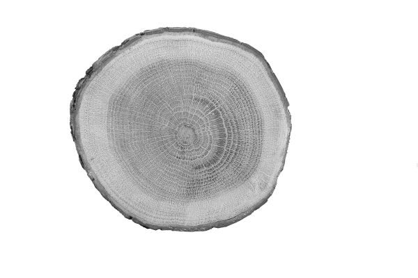 Holzheizungen innovativ und modern