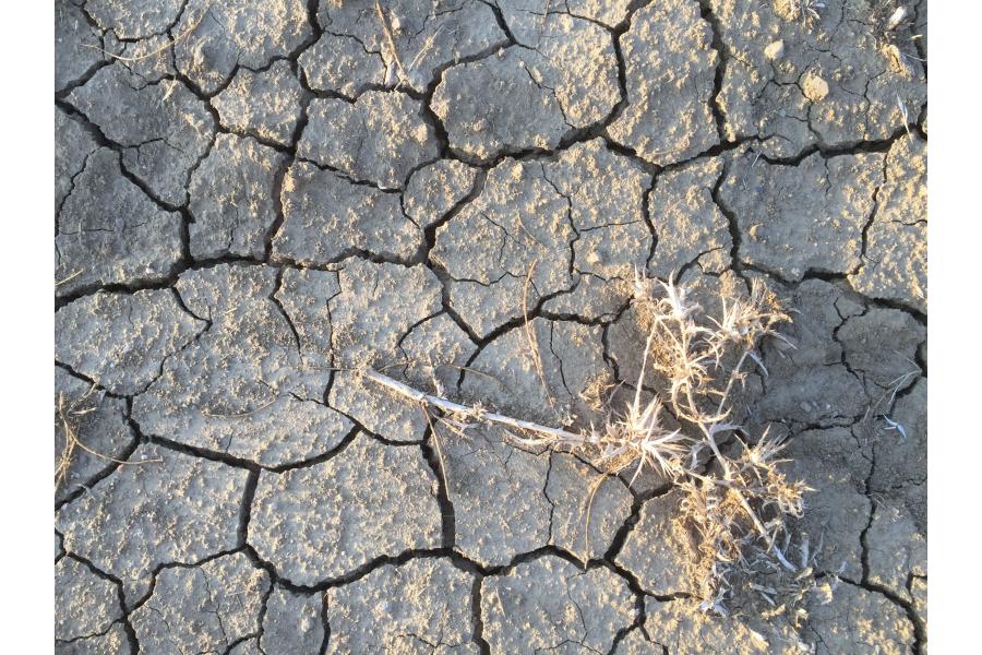 Aufgebrochener Erdboden mit einer vertrockneten Pflanze.
