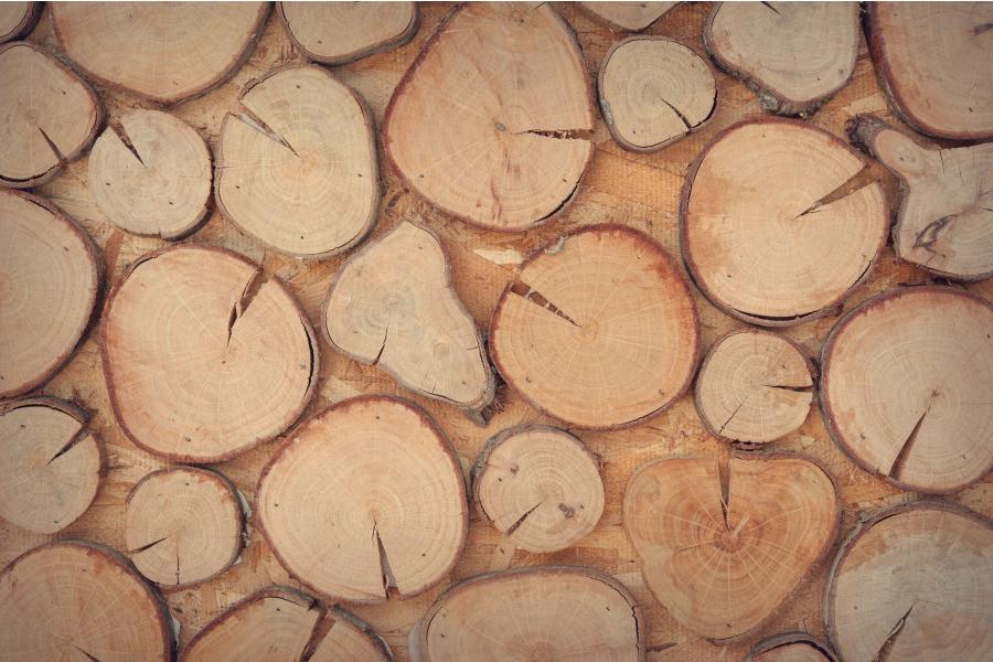 Mehrere Holzscheiben nebeneinander.