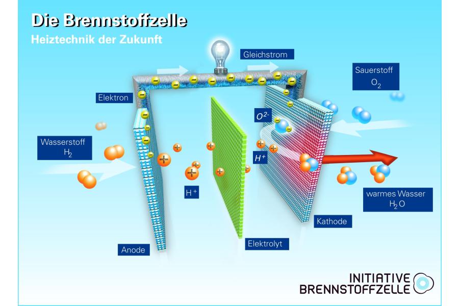 Die Grafik zeigt den inneren Aufbau einer Brennstoffzelle.