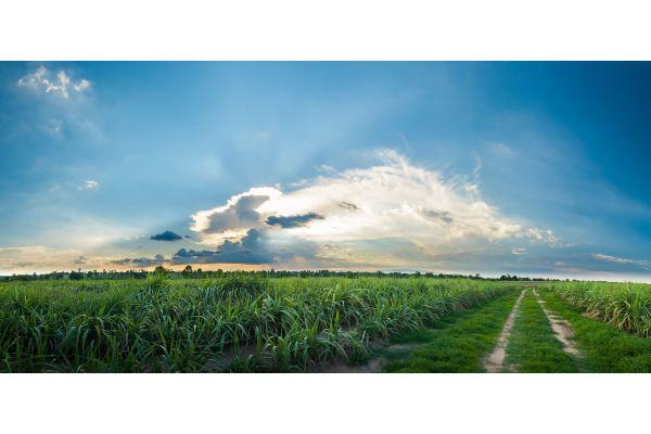 Ein Feld beim Sonnenuntergang.