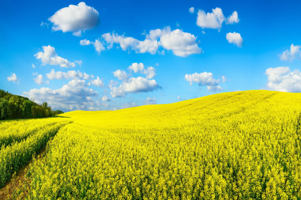 Biogenes Flüssiggas hat Marktpotential