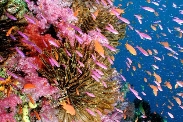 Das Bild zeigt eine Unterwasser-Aufnahme mit Fischen und Korallen.
