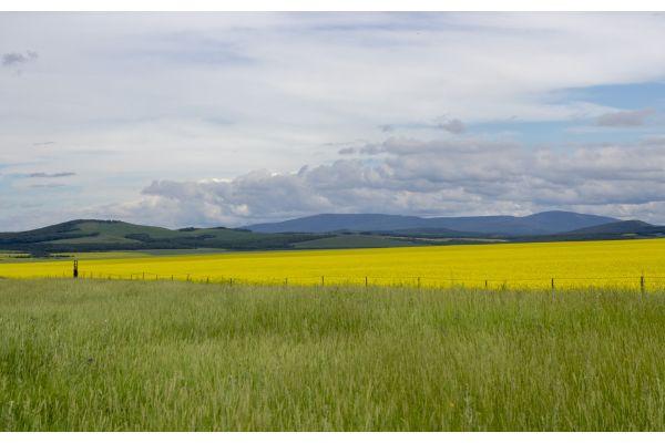 Ein Feld, dahinter Berge und Wolken.
