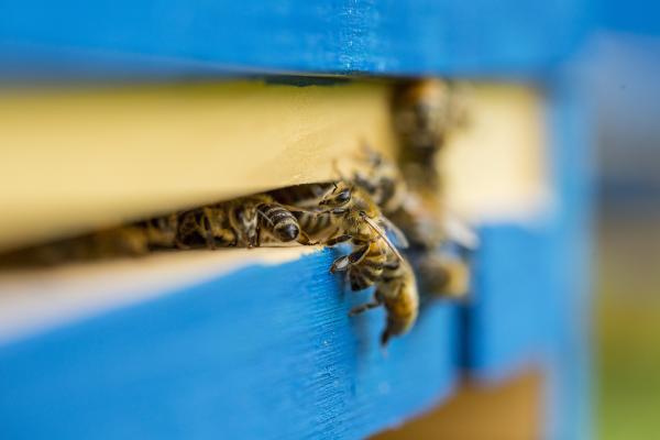 Fleißige Bienen bei der G.U.T.-GRUPPE