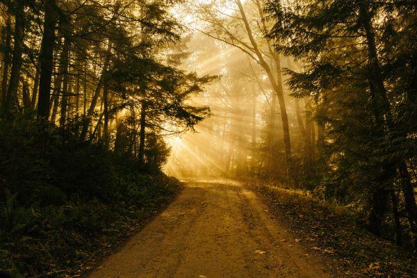 Ein sonniger Waldweg.