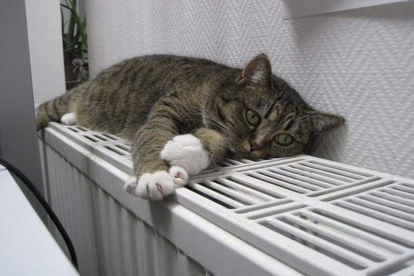 Heizkörper-Ventilation mit pfiffig designter Systemtechnik
