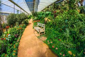 Ein Gewächshaus mit vielen Pflanzen und einer Bank.