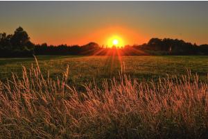 Die Sonne geht über einem Feld unter.