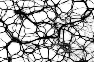 Ein neuronales Netz.